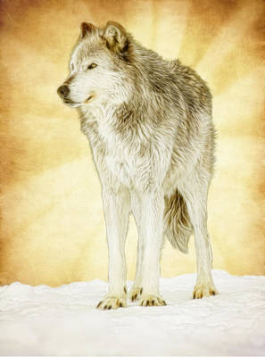 Photograph - Wolf Shine by Steve McKinzie