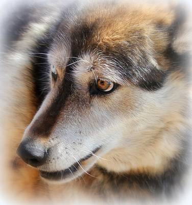 Photograph - Wolf Spirit by Diane Alexander