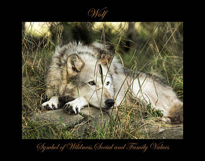 Photograph - Wolf Symbol Of by Marty Maynard