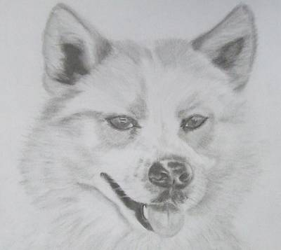 Drawing - Wolf The Husky by Sandra Muirhead