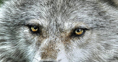 Photograph - Wolf Wisdom by Skye Ryan-Evans