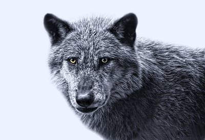 wolfman II Art Print by Joachim G Pinkawa