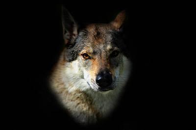 Photograph - Wolfy by Jenny Rainbow