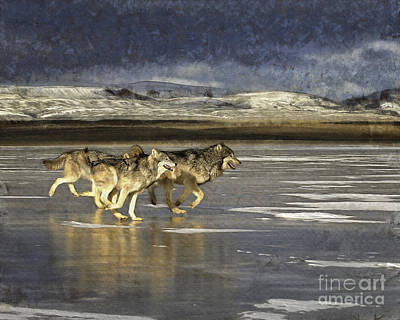 Wolves - Frozen Tundra Art Print by Wildlife Fine Art