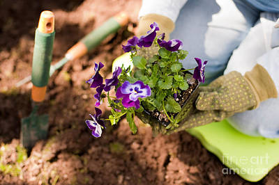 Photograph - Woman Gardening by Jim Corwin