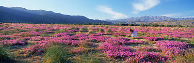 Anza Borrego Desert Photograph - Woman In A Desert Sand Verbena Field by Panoramic Images