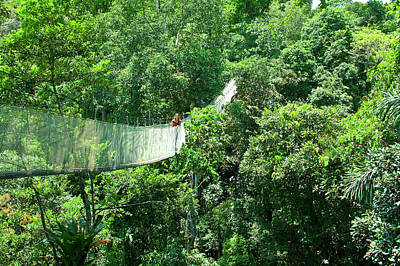 Amazon Rainforest Photograph - Woman On A Canopy Walkway by Miva Stock