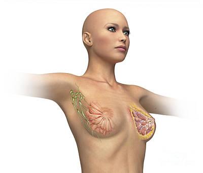 Incision Digital Art - Woman Torso With Breast Cutaway, Cross by Leonello Calvetti