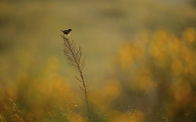 Small Photograph - Wonder Land by Assaf Gavra