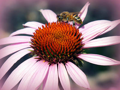 Bee On Flower Photograph - Wonder Of Pollen by Karen Wiles