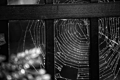 Insects Photograph - Wonder Web by Carrie Ann Grippo-Pike