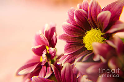 Gerber Daisy Photograph - Wonderful Flowers by Lisa Killins