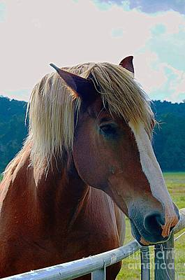 Wonderful Horse Art Print