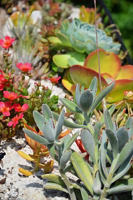 Sempervivum Painting - Wonderful Succulent Plants 2 by Lanjee Chee