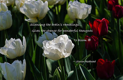 Photograph - Wonderful Thoughts Bloom by Jordan Blackstone