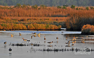 Wonderful Wetlands Art Print by Al Powell Photography USA