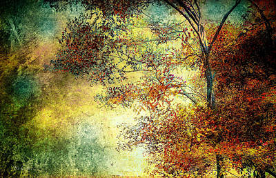 Fall Trees Photograph - Wondering by Bob Orsillo