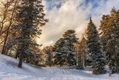 Highland Park Photograph - Wonderland by Mark Papke