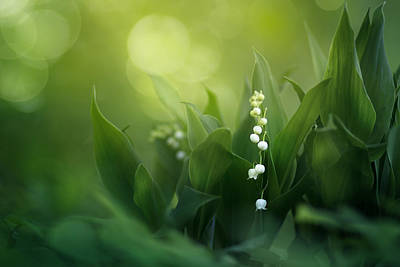 Floral Photograph - Wonders Of Spring Forest by Magda  Bognar