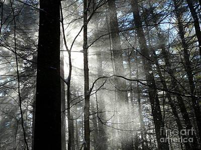 Photograph - Wondrous Light by Avis  Noelle