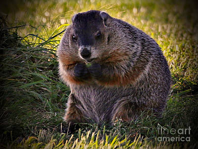 Photograph - Wood Chuck by Elizabeth Winter