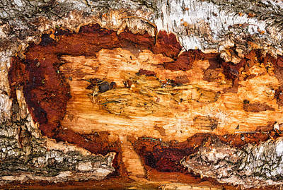 Photograph - Wood Closeup - Tree Trunk by Matthias Hauser