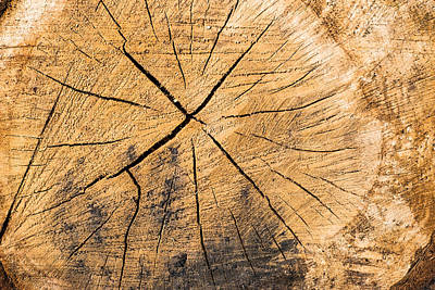 Photograph - Wood - Cut Surface Of A Tree Log by Matthias Hauser