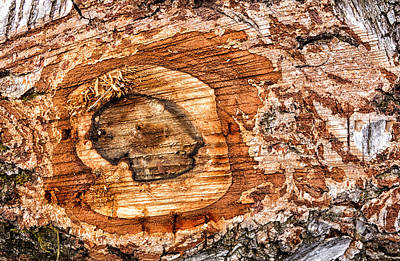 Photograph - Wood Detail by Matthias Hauser