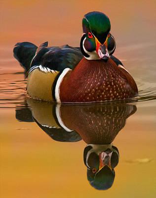 Wood Duck Digital Art - Wood Duck #6 by Wade Aiken