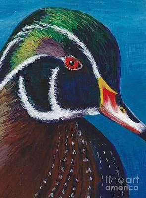Wood Duck Painting - Wood Duck by Allison Constantino