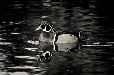 Photograph - Wood Duck Bw by Randy Hall