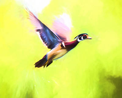 Mixed Media - Wood Duck In Flight Art by Priya Ghose