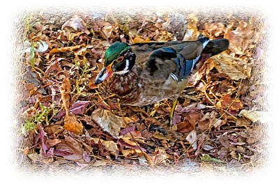 Wood Duck Profile Photograph - Wood Duck In The Woods by Constantine Gregory