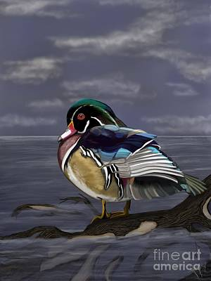 Ipad Art Drawing - Wood Duck by Lisa Estep