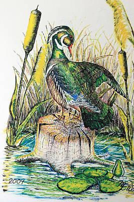 Wood Duck Mixed Media - Wood Duck by Martin Way
