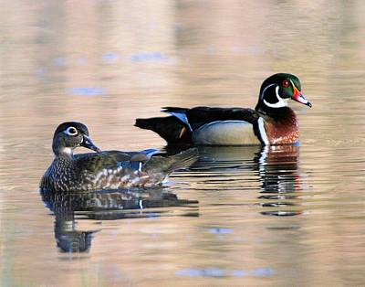 Wood Duck Pair In Kettles Art Print