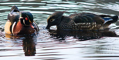 Waterfowl Photograph - Wood Ducks 1 by Terry Elniski