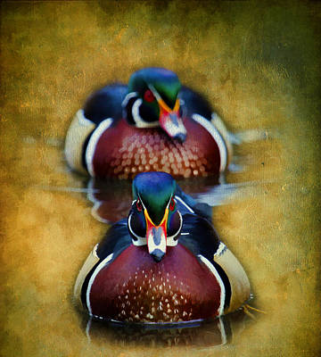 Photograph - Wood Ducks by Steve McKinzie