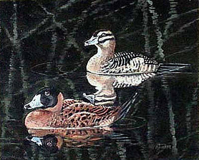 Waterfowl Painting - Wood Ducks Study by Donna Tucker
