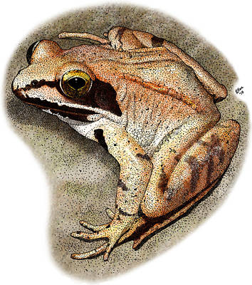 Photograph - Wood Frog by Roger Hall