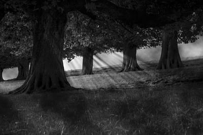 Photograph - Wood I Dream by Stewart Scott