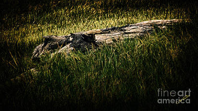 Digital Art - Wood In Grass by Charles Davis