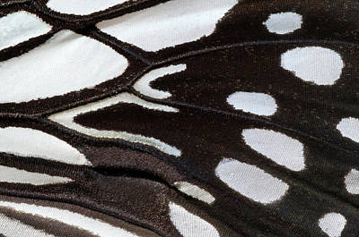Lincolnshire Photograph - Wood Nymph Butterfly Wing Markings by Nigel Downer