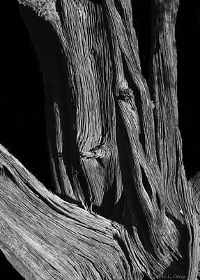 Photograph - Wood by Peri Craig