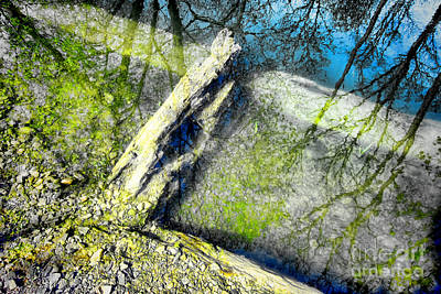 Tree Root Photograph - Wood Reflections by Olivier Le Queinec