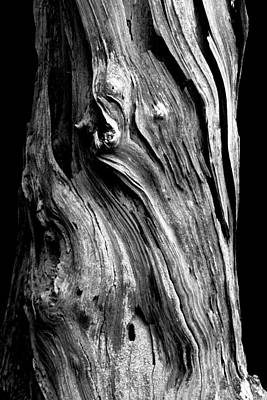 Tree Bark Photograph - Wood by Shane Holsclaw