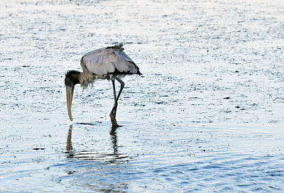 High Iso Photograph - Wood Stork Feeding At Low Tide by Chris Tennis