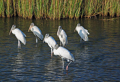Wood Stork Flock Original