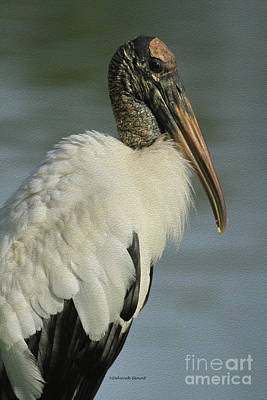 Stork Photograph - Wood Stork In Oil by Deborah Benoit