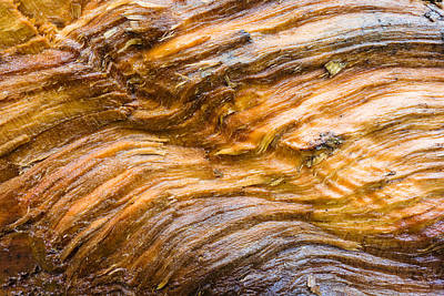 Photograph - Wood Structure Closeup Brown Beige Orange by Matthias Hauser